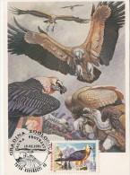 33010- BEARDED VULTURE, HIMALAYAN VULTURE, GRIFFON VULTURE, BIRDS, MAXIMUM CARD, 1991, ROMANIA - Adler & Greifvögel
