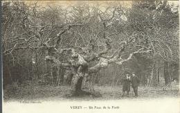 51 - VERZY - Un Faux De La Forêt - Verzy