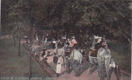 Elephants People Riding Elephants In Zoological Gardens London E