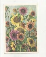97418 Cartolina Fiori Girasole Hermann Muntwyler Sonnenblumen - Fiori