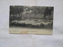 COCHONS   élevage De Chommé 51 Au Dos Pub Pour La Nourriture Des Porcs Voir Scan - France