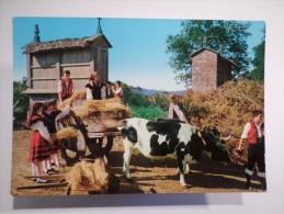 PC SPAIN ESPAÑA ESPANA GALICIA  1960years FOLKLORE GALLEGO GOVEXANDO O TRIGO - AGRICULTURE COW  - ESPIGUEIRO ESPIGUEIROS - Espagne