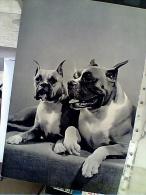 CANE DOG  BOXER   N1960  FC6301 - Hunde