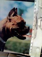 3 CARD CANE DOG BOXER    N1975  FC6304 - Cani