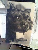 CANE DOG BOXER 1938     N1938  FC6307 - Hunde