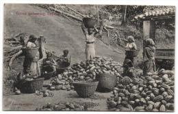 Cocoa Gathering Ceylon - Sri Lanka (Ceylon)