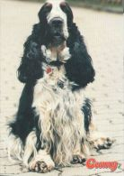 DOGS / HUNDE / CHIENS /  -    COCKER SPANIEL  CARD  UNUSED   ( P 3429 / - Hunde
