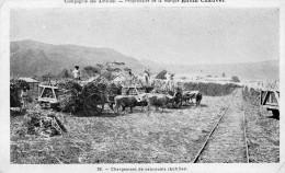 Compagnie Des Antilles - Proprietaire Rhum Chauvet - Chargement De Cabrouets - Martinique