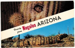 Howdy From Nogales, Arizona - Owl In Cactus, Gila Monster - Greetings From...