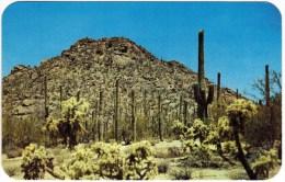 Tucson Mountain Park, Near Tucson, Ariz - Tucson