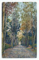 Cannes - Ile Sainte-Marguerite - Allée Des Eucalyptus - Cannes