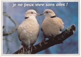 """Tourterelles """" Je Ne Peux Vivre Sans Ailes! """" - Vogels"""