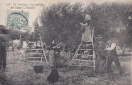 En Provence La Cueillette Des Olives - Non Classificati