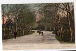 Uruguay Montevideo Tarjeta Postal Ed. Strobach Nº73 Avenida Colon Original Ca1900 Postcard Cpa Ak (W4_1827) - Uruguay