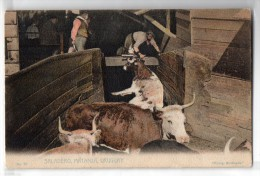 Uruguay Montevideo Tarjeta Postal Ed. Strobach Nº78 Cattle Breeding Slawther Original Ca1900 Postcard Cpa Ak (W4_18 - Uruguay