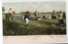 Uruguay Tarjeta Postal Ed. Strobach Ruralia Gaucho Ethnic Nº31 Cattle Breeding Original Ca1900 Postcard Cpa Ak (W4_ - Uruguay