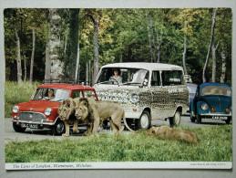 Mini, Ford Tansit, VW 1200 Coccinelle Käfer, The Lions Of Longleat, Auto Safari, Warmister Wiltshire - Passenger Cars
