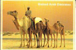 UNITED ARAB EMIRATES, Camels - Ver. Arab. Emirate