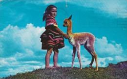 Peru Cuzco Baby Vicuna Young Girl With Llama 1964