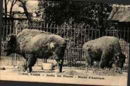 228 Paris - Jardin Des Plantes - Bisons D'amérique - Altri