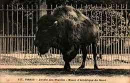 317 Paris - Jardin Des Plantes - Bison D'amérique Du Nord - Altri