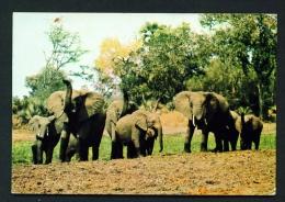 ZIMBABWE  -  Wankie  Elephants  Used Postcard As Scans (creased Corner) - Zimbabwe