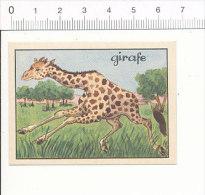 Image Editions éducatives / Girafe Animal / IM 175/6 - Trade Cards