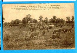 MOL385, Coutumes Et Courses De Taureaux à La Provençale, Camargue, Chevaux, Horse, Circulée Sous Enveloppe - Bull