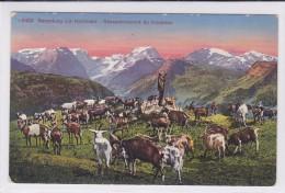 Ziege. Chèvre. Goat.. Rassemblement Du Troupeau. Sammlung Zur Heimkehr - Animaux & Faune