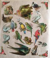 Joli Lot De 18 Découpis, Thème Oiseaux - Pretty Lot Birds Die Cuts And 4 Rare Die Cut Corners - Animaux