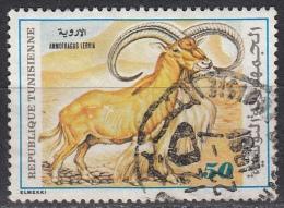 Tunisia, 1980  - 50m Ammotragus Lervia - Nr.774 Usato° - Tunisia (1956-...)
