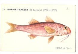 Animaux - Poisson Le Rouget Barbet Dit Surmulet Par Illustrateur Neuve TTBE - Pesci E Crostacei