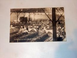 Carte Postale Ancienne : TENERIFE : OROTAVA : Sindicato Agricola Del Norte De Tenerife, Bananas - Tenerife