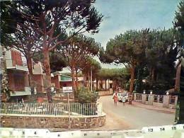 GROSSETO - Marina Di Grosseto - Via Caprera - La Pineta - 1966 VB1986 FC6531 - Grosseto