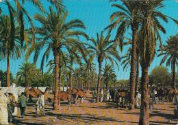 LIBYA - Zavia Market - Libia