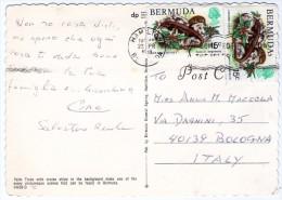 BERMUDA-PALM TREE / SHIPS / THEMATIC STAMPS-REPTILES - LIZARD - Bermuda