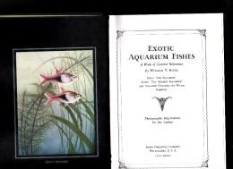 EXOTIC AQUARIUM FISHES PAR Wm.T.INNES - Livres, BD, Revues