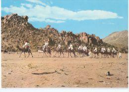 SAUDI ARABIA - CARAVAN HAJJAZ - MECCA MUKARAMA - PHOTO MUFTI - 1970s ( 232 ) - Arabie Saoudite