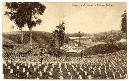 INDONESIE  JONGE TABAK ONDER SCHADUW PLANKJES - Indonésie