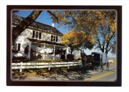 Etats Unis: Lancaster, Amish Seasons, Autumn Bestows Its Beauty On The Amish Country, Buggy (15-3850) - Lancaster