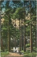 Rigascher Strand - Dünenwald Gel. 1911 - Letonia