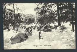 NORVEGE - HAMMERFEST- Troupeau De Rennes En 1932 - Voir Scans - Lot P14006 - Norway