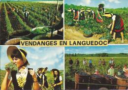 VENDANGES EN LANGUEDOC - France