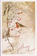 Voeux °° Nouvel An - Rouge-gorge Sur Une Branche - Encart Vierge Toilé 11x17 - New Year