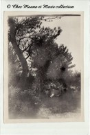DANS LES PINS DE TRETS - 1926 - PHOTO 12 X 8.5 CM - Lugares
