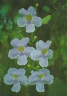 Palau Edobo Temengil Kesiokel A Ungial Orchids - Palau