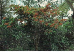 Palau Edobo Temengil Belau Sakura Sara Lomung Beautiful Tree - Palau