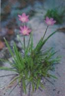 Palau Edobo Temengil Klamiokl A Bngal Beautiful Flower - Palau