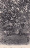 86 -- Vienne -- Boismorand -- Le Gros Chêne -- Attelage/boeufs - France