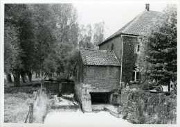 OVERIJSE (Vlaams-Brabant) - Molen/moulin - Echte Foto Van De Watermolen Van Terlanen Met Overdekt Rad Omstreeks 1983. - Places